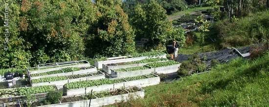 Overview of Adaptations raised beds.
