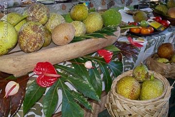 Display of breadfruit varieties at chef demonstration tent.