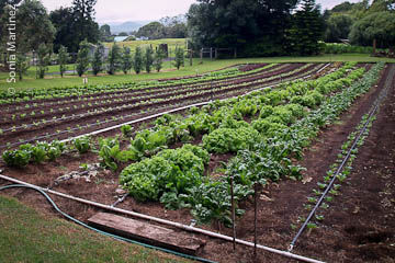 Production field at Ka 'Ohi Nani Farm.
