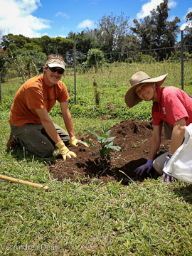 Kohala-Planting-a-Tree