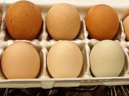 Fresh eggs from Malanahae Farms.
