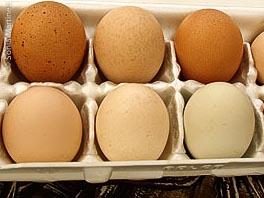 Fresh eggs from Malanahae Farms.