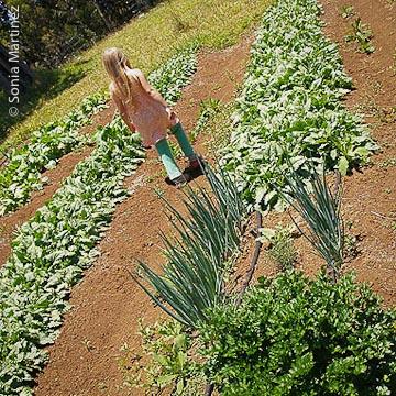 Ella walking through the garden at Ohia Fields.