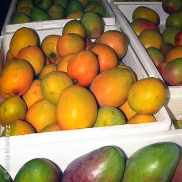 Eke Nui Farm mangoes.