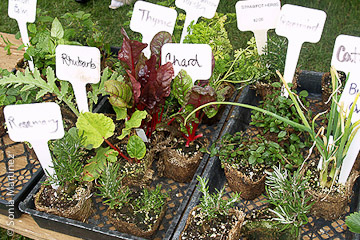 Edible plants sold by ESP Nursery