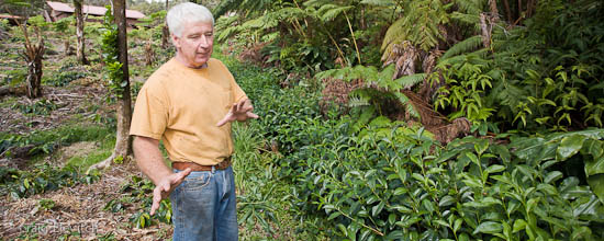 Mike Riley of Volcano Tea Garden in Volcano shows his tea plants, which are growing together with native forest trees.