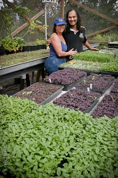 Tane and Maureen Datta tend their certified organic micro-greens.