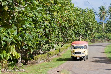 Homegarden fruit trees in Samoan village, 'Upolu.