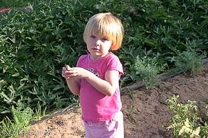 Everyone is welcome to chip in and help. Pastor Mary's daughter picks some tomatoes for an afternoon snack.