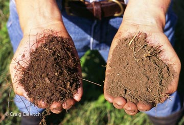 soil comparison-CElevitch