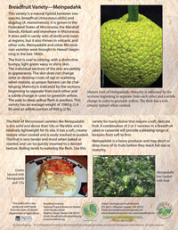 Breadfruit-Meinpadahk-card-200px