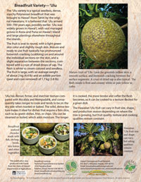 Breadfruit-Ulu-card-200px