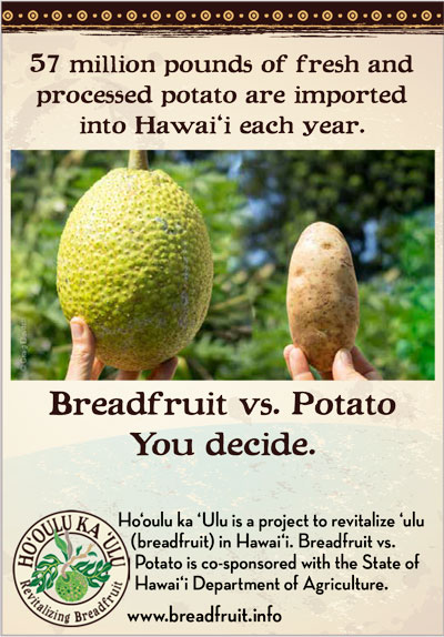 breadfruit-vs-potato-You-Decide-1